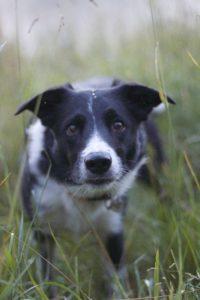 trening psów nakręcony z drona