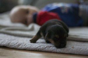 niemowlę i psy