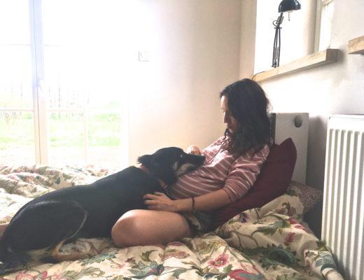 jak przygotować psa na dziecko