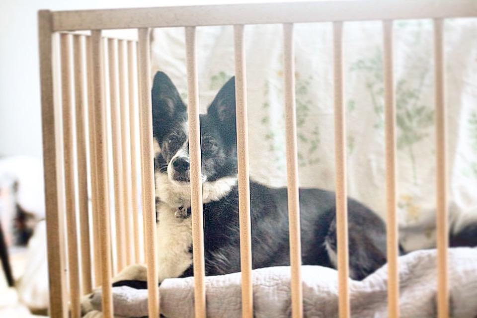 powrót ze szpitala z dzieckiem pies