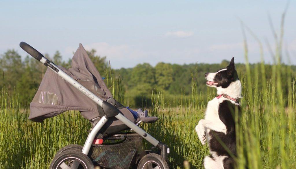 organizacja treningów z psem