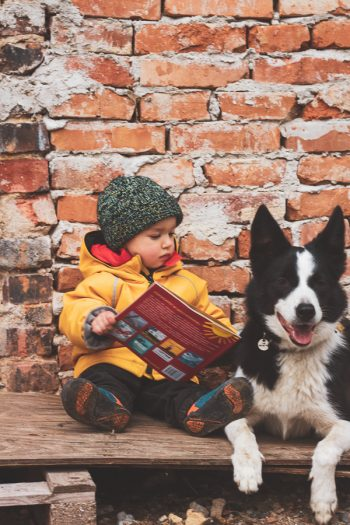 border collie z dzieckiem
