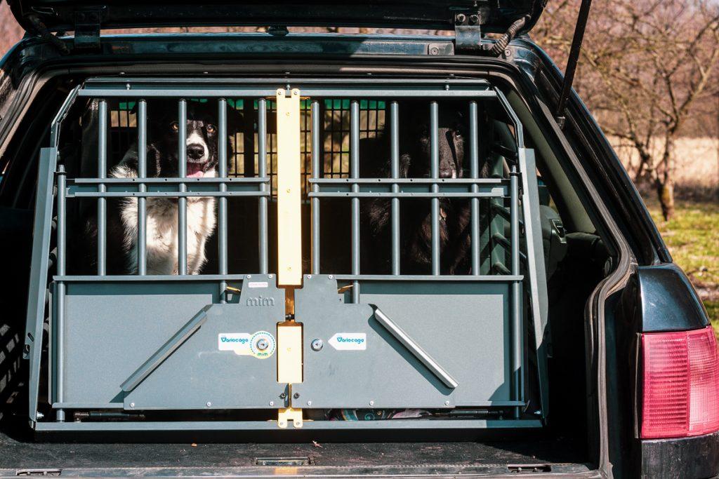 bezpieczny pies w samochodzie