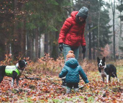 nadzorowanie relacji pies i dziecko