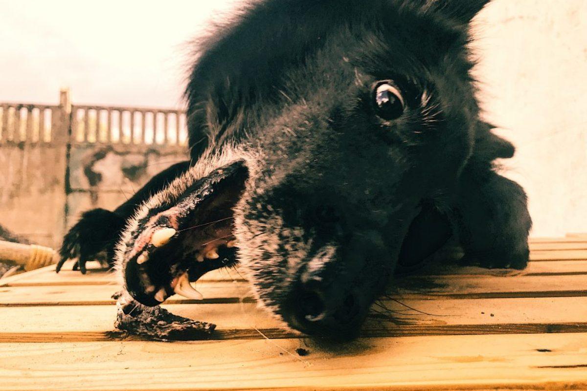 zdrowe smakołyki dla psa