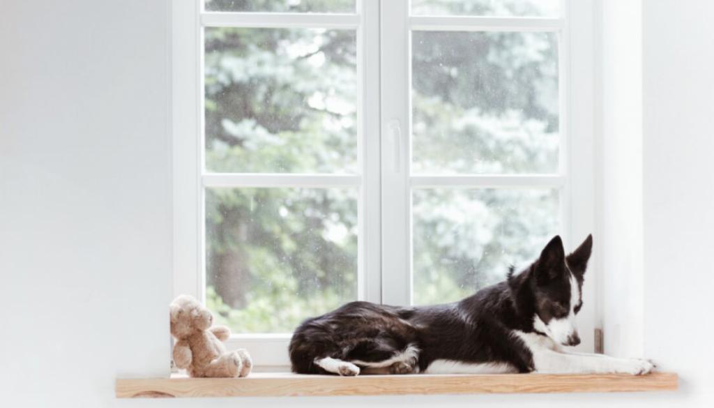jak nauczyc psa odpoczywania w codziennym zyciu