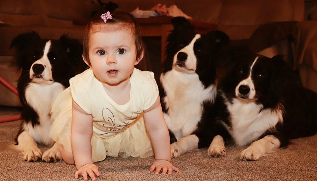 raczkujące dziecko i pies border collie