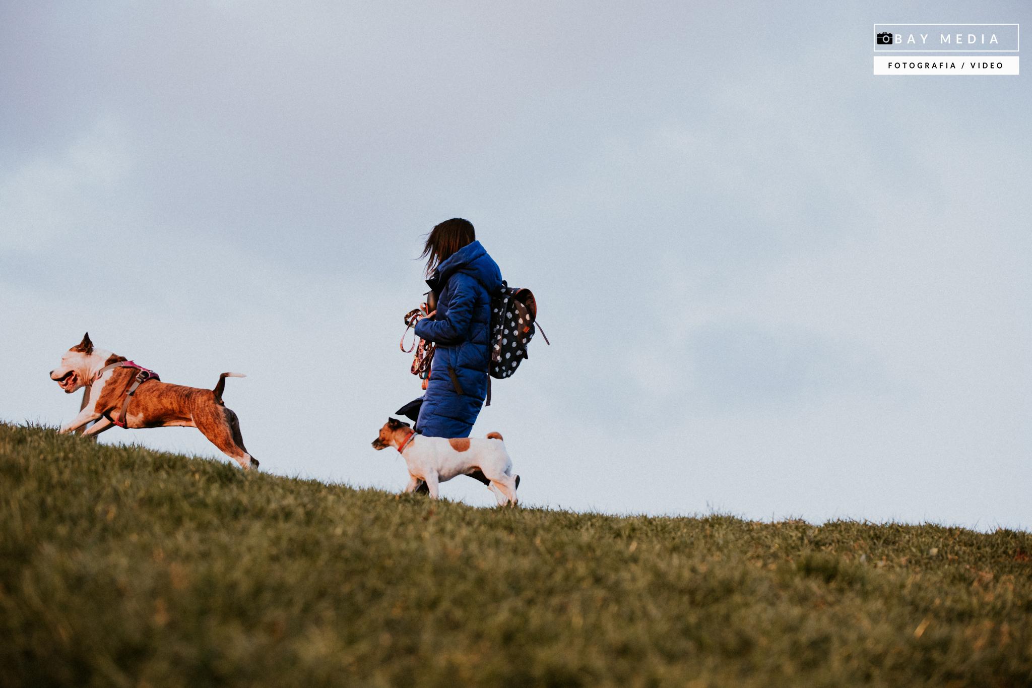 edukacyjne spacery z psem