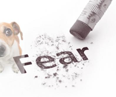 jak wzmocnic strach psa