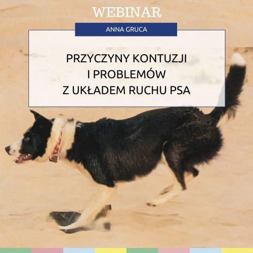 Przyczyny problemów i kontuzji z układem ruchu u psów