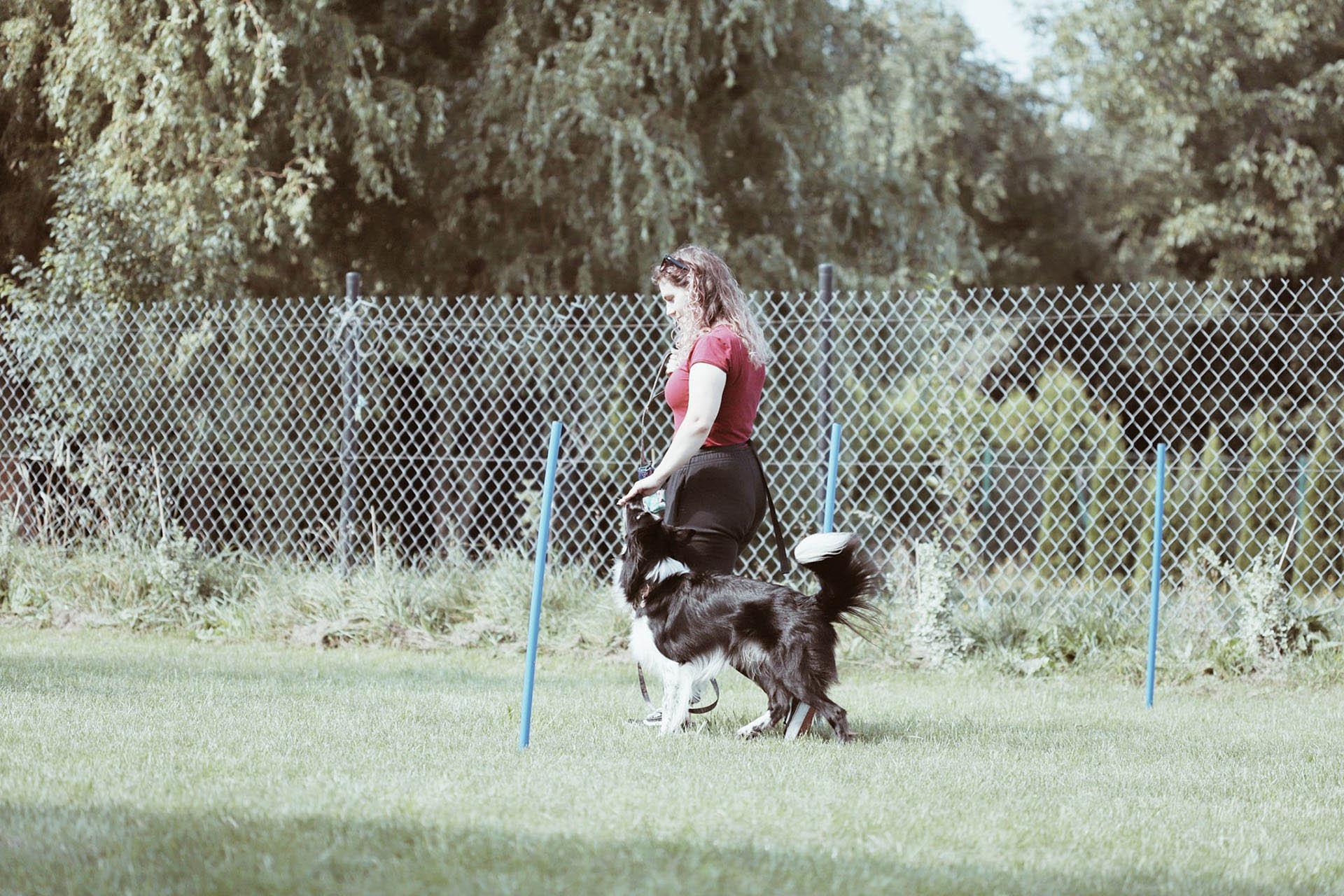 balansdog_foto8