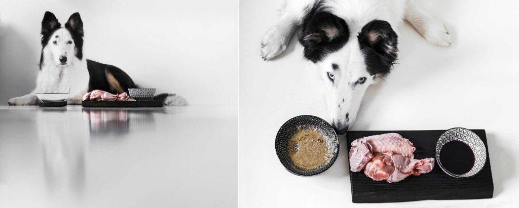 Jak wybrać czym karmić psa?