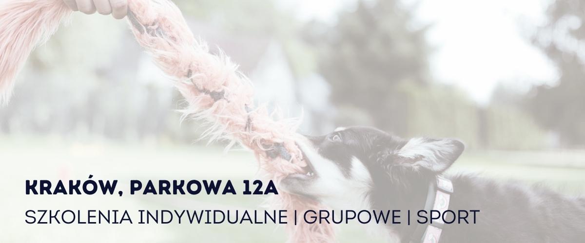 Szkolenie psów w Krakowie