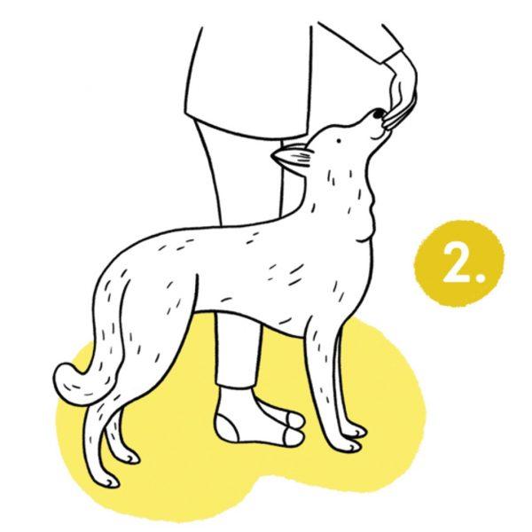 trening człowieka z psem