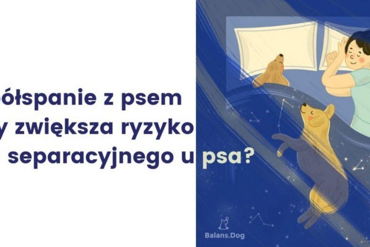 o bezpiecznym spaniu z psem