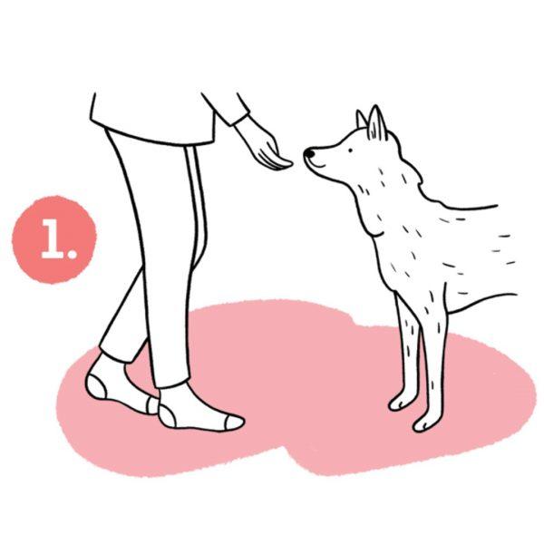 pies ćwiczący sztuczki